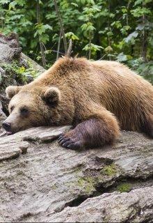 """Книга. """"Обратная сторона сказок. Маша и медведь"""" читать онлайн"""