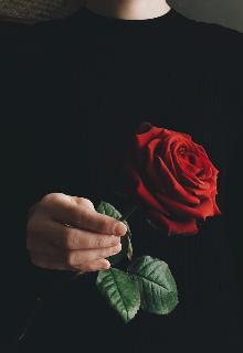 """Книга. """"Пианист с красной розой в руке"""" читать онлайн"""