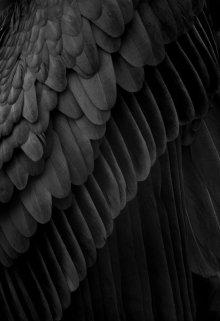 """Книга. """"Дуалисты. Крылья отчаяния"""" читать онлайн"""