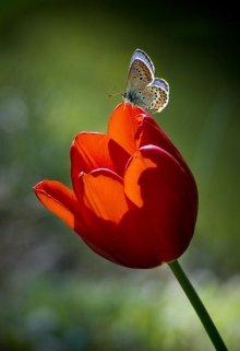 """Книга. """"Тюльпан и бабочка."""" читать онлайн"""