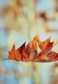 """Libro. """"Dead Leaves"""" Leer online"""