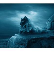 """Книга. """"Кошка из Сна"""" читать онлайн"""