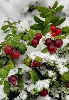 """Книга. """"Сказка о Морозко,ягоде клюкве и любви"""" читать онлайн"""