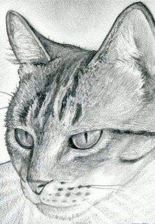"""Книга. """"История одного кота"""" читать онлайн"""